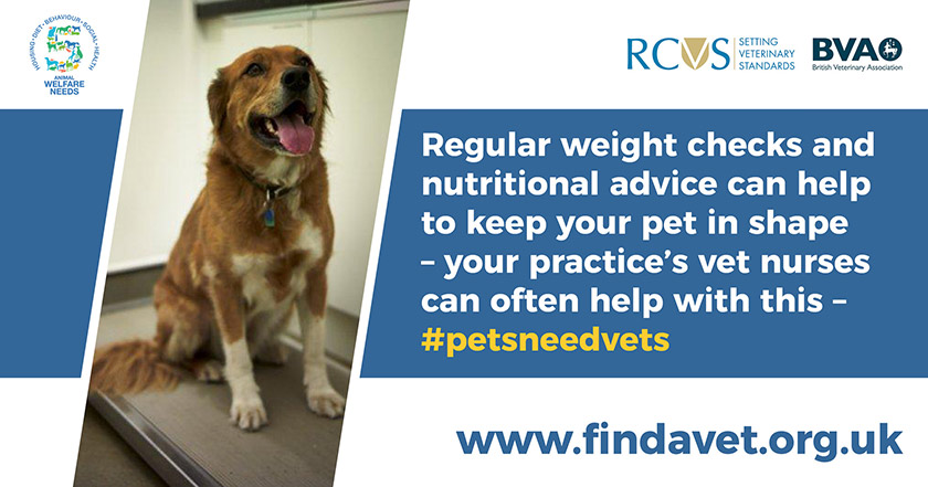 text - Regular weight checks and nutritional advice can help to keep your pet in shape - your practice's vet nurses can often help with this.
